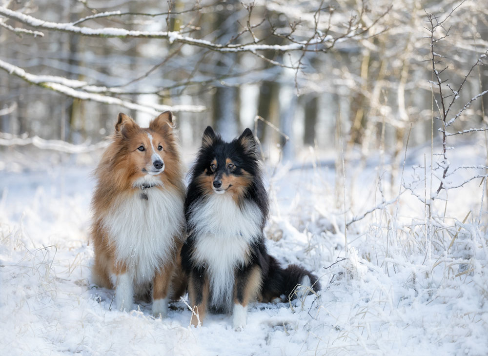 Hundefotos-outdoor-im Winter
